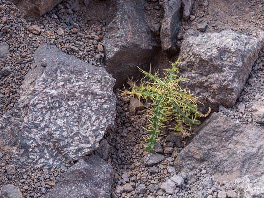 Interessante Gesteinseinlagerungen, kleine Berberdörfer und kaum begangene Wege bieten uns eine interessante Rundtour ohne technische Schwierigkeiten