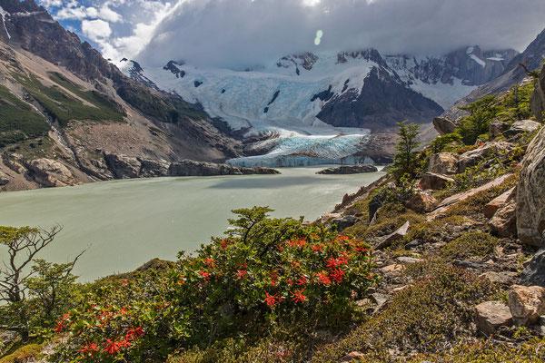 Feuerbusch und Schwanzflosse, so benennen wir die felsige Halbinsel, welche vom Cerro Solo in die Laguna Torre hineinragt