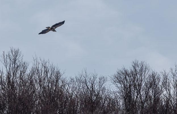 ...trotzdem ist der Seeadler uns in Sachen Höhengewinn weitaus überlegen