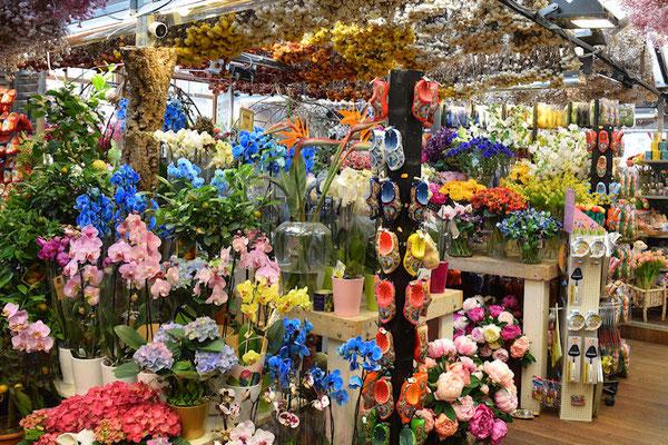 Toutes les plantes à bulbes, tulipes, jonquilles, jacinthes, crocus, amaryllis , des bouquets et des pots de plantes à fleurs, des orchydées, des sabots en bois...