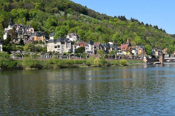 Rive du bord du Neckar