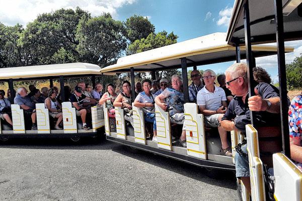 Jeudi 5 juillet : A bord du petit train de Collioure