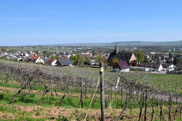 Le vignoble de Rüdesheim
