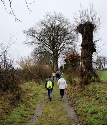Le chemin des Mesliers, les Teillais, le chemin de la Cocherie, nous sommes à St Cyr le Gravelais en Pays de Loire