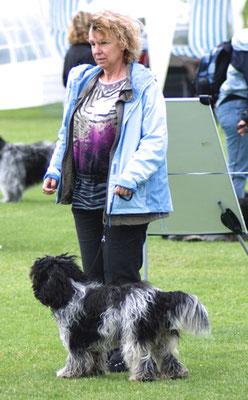Schapendoeshündin Paolina Maxima von Happy Shaggy Family wird ausgestellt
