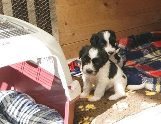 zwei Kleine haben auch gleich den Unterschlupf auf der Terrasse gefunden
