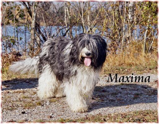 Meine Schapendoeshündin Maxima am Stausee