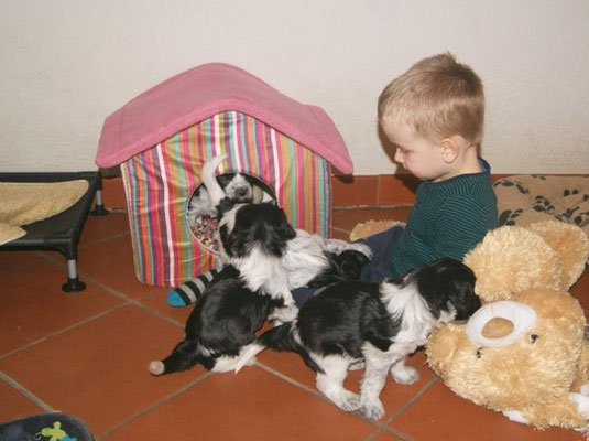 Schapendoeswelpen mit meinem Enkelkind Moritz