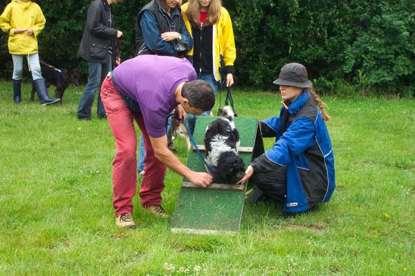 Schapendoeswelpe Fellow mit seiner Familie bei den ersten Übungen im Hundesport