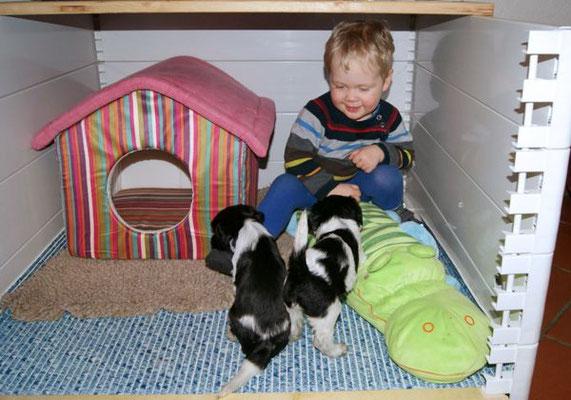 Schapendoeswelpen von Happy Shaggy Family mit Benedikt in der Wurfkiste