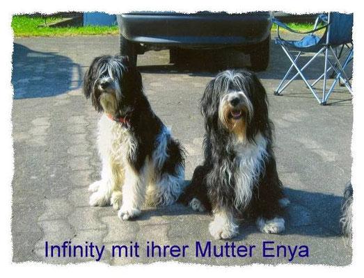 meine Schapendoeshündinnen Enya und Infinity trafen sich in Elmshagen