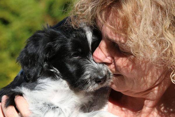Schapendoeszüchterin Doris Schindler mit Schapendoeswelpe Vito