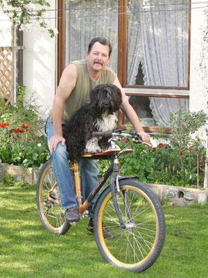 Schapendoes Eika hat es bequem auf dem umgebauten Fahrrad