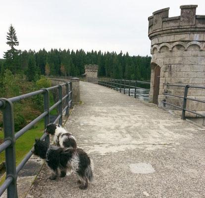 Schapendoes Yona und Xamira leben in Tschechien bei Lenka