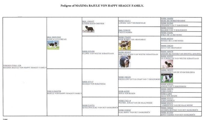 Ahnentafel für Schapendoeshündin Maxima Bajule von Happy Shaggy Family