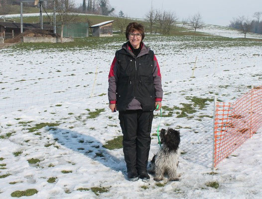 Schapendoes-Junghund Viva Gulietta am Hundeplatz