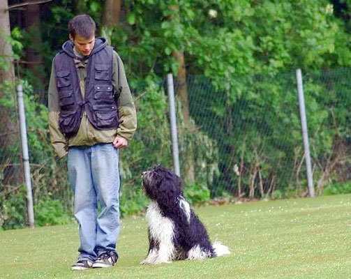 Schapendoes Hemphys Maja im Hundeverein bei der Prüfung zum Begleithund