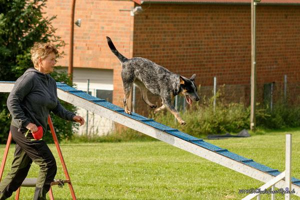 Jen; Australian Cattle Dog