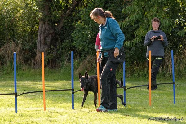 Belle; Holländischer Schäferhund
