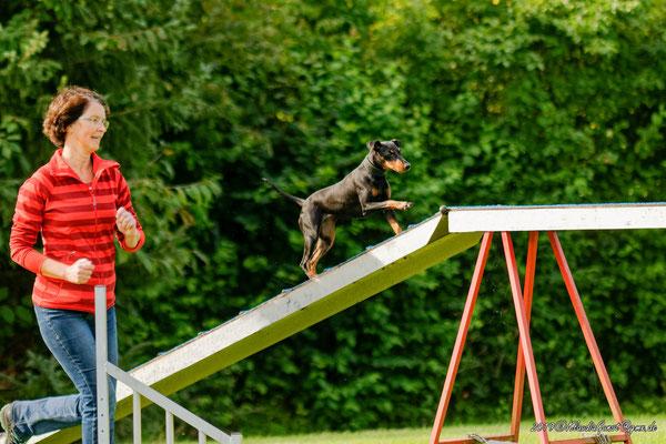 Fera; Manchester Terrier