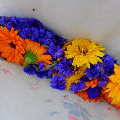 Calendula et bleuet