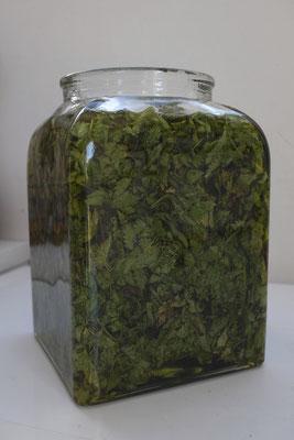 Macération huileuse de Cataire