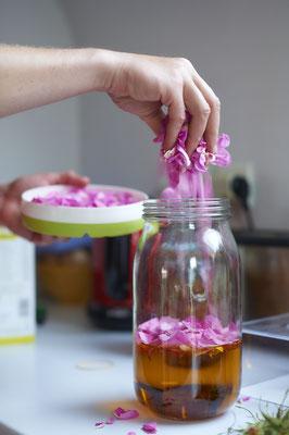 Macération huileuse de roses de Damas