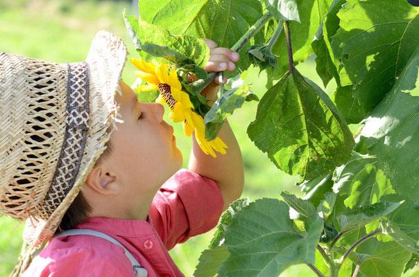 child ans sunflower