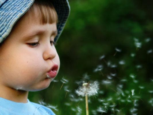 kleines Kind mit Pusteblume