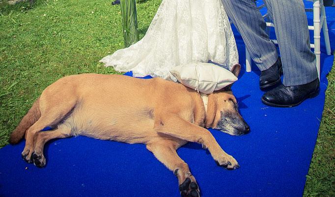Hund bei freier Trauung – Foto von Edward Park