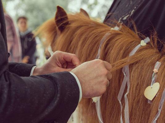 Ringträger Ponny mit Ringen in der Mähne – freie Trauung auf der Pferdekoppel – Foto von Melanie Mauro