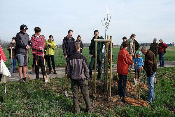 Erläuterungen zur richtigen Baumpflanzung einschließlich Herstellung der Pflanzgrube und des Schnitts der Obstbaumgehölze. Foto: Hans Schnitzler
