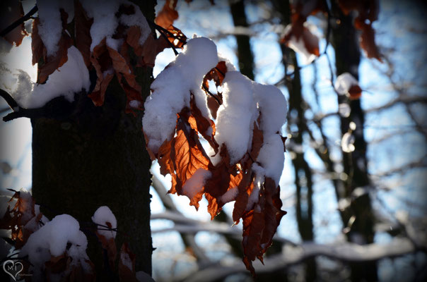 >Goldener Winter<