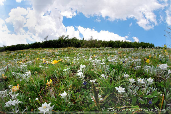 Landschaft schöne Steiermark von Heinz Toperczer