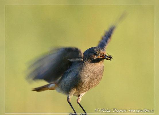 Tierfotografie von Heinz Toperczer, Wildlife Photos