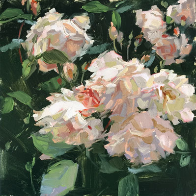 Pemberton rose 'Penelope' (private collection)