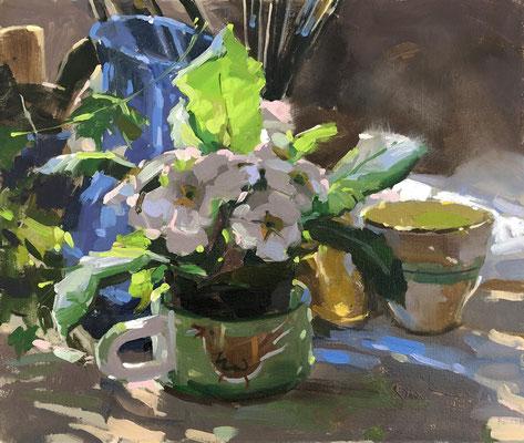 Morning glow, primrose in the studio (SOLD)