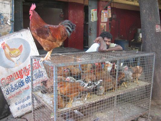 Hühnerverkäufer in Chennai