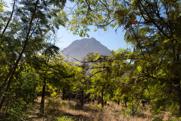 Mont Velha