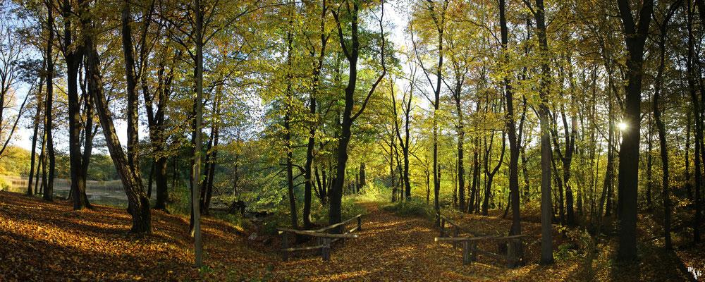 Wolfsburger-Wald