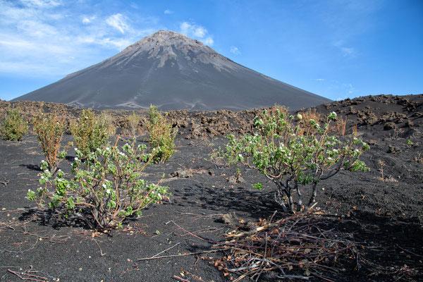 Obstblüte am Pico Pequeno