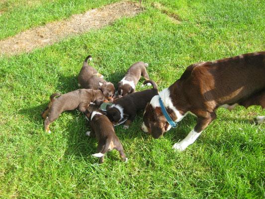 Sennenhunde von Kirsten Becker