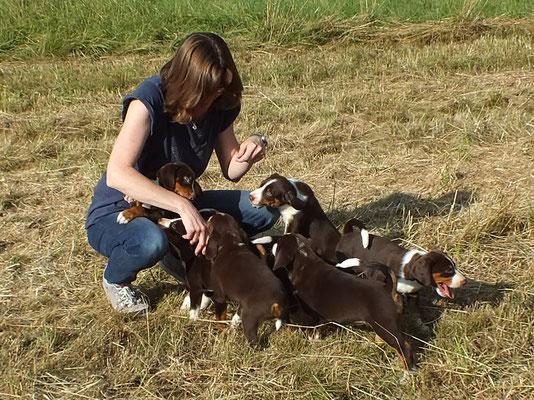 Appenzeller Sennenhunde von Kirsten Becker