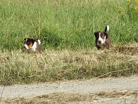 Brecht und Bente aus dem Flößerdorf