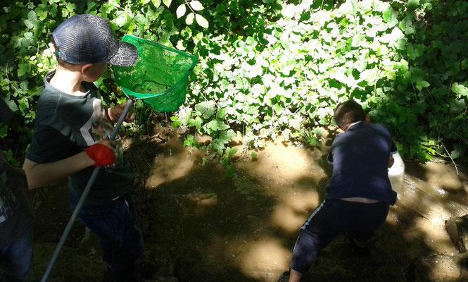 BUND-Aktion mit und für Kinder in Wiesen und Wäldern, Foto: Doris Ritz