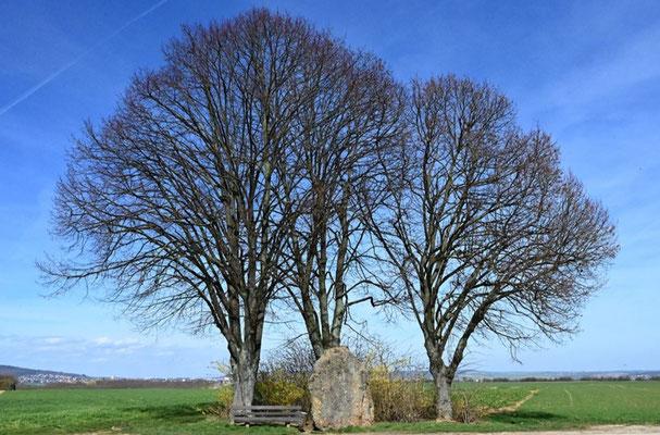 Baumgruppe mit Hinkelstein, Foto: Annette Hausmanns