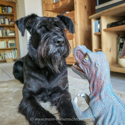 T-Rex vs. Schnauzer: Der Angriff der Killerechse.