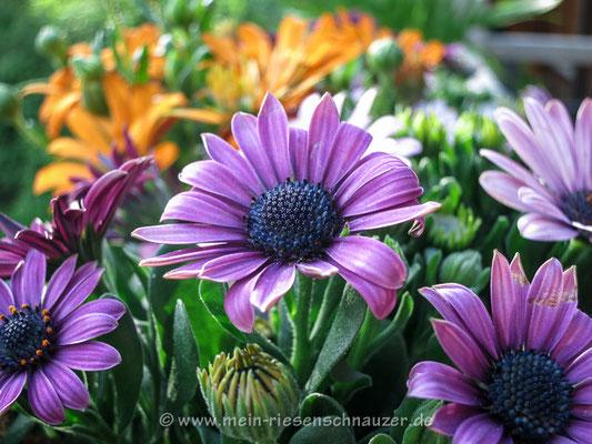 Blühendes buntes Blumenzeugs.