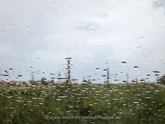 Es regnet, es regnet, der Gärtner wird nass ...