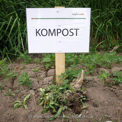 Friedhof der Unkräuter.